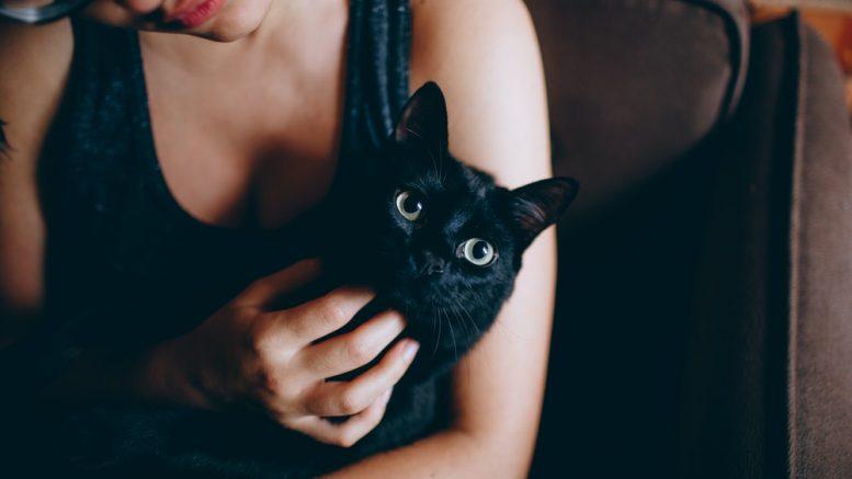 apprivoiser un chat